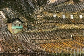 Terraced_Vineyard_2_Suisse_2000