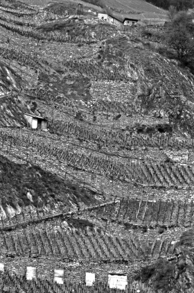 Terraced_Vineyard_Suisse_2000