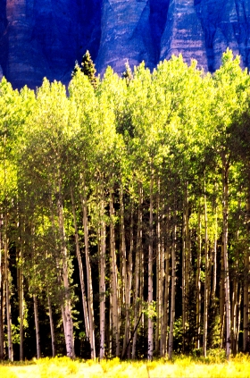 Trees_5_Rocky_Mountain_National_Forest_2001