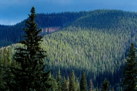Trees_Rocky_Mountain_National_Forest_2001